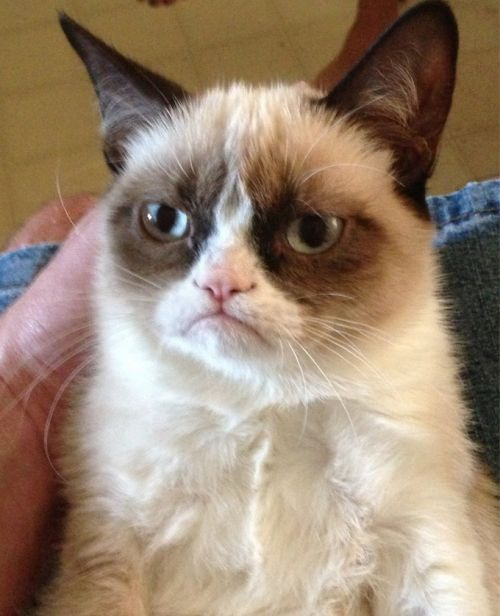Grumpy Cat Meme Template Thumbnail